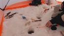 Рыбалка на Белом море, сухое море, железные ворота - камбала в марте или бриллиантовая рука.