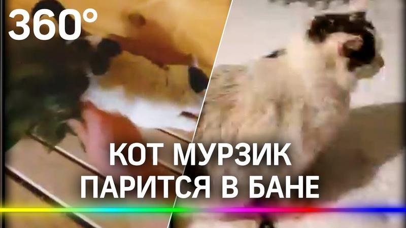 Кот парится в бане Мурзик из Челябинска настолько суров что не боится 60