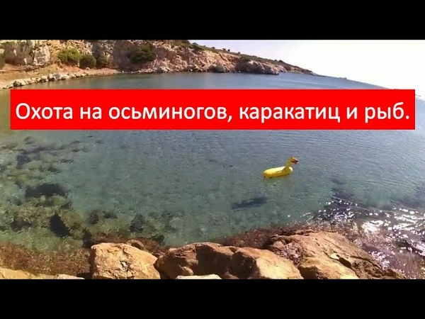 Подводная охота на море Охота на осьминогов каракатиц и рыб в Греции for octopus