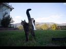 ПРИКОЛЫ с котами 2021 / я ржал до слез / СМЕШНЫЕ ЖИВОТНЫЕ / приколы с животными