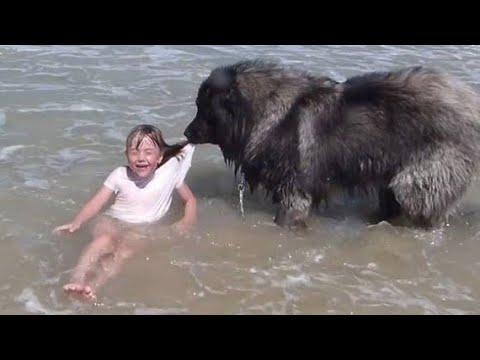 Умные животные спасли жизни людей Собака герой спасла жизнь девочке Кот спасает малыша