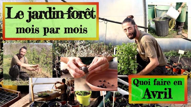Jardin forêt en Permaculture Que faire en avril