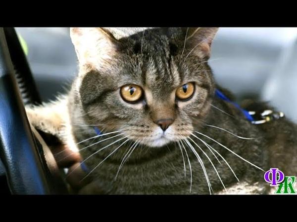 Увидев уходящего Жору кот заволновался завертелся и жалобно закричал пытаясь рвануть следом…