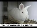 Лучшая клетка что я видел!! Клетка для кроликов своими руками, пошаговая постройка!!