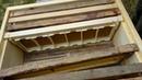 Пчелиная пасека с нуля. 4 серия. Сотовый мед.