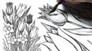 Букет из тюльпанов и нарциссов - Рисунок тушью и каллиграфическим пером