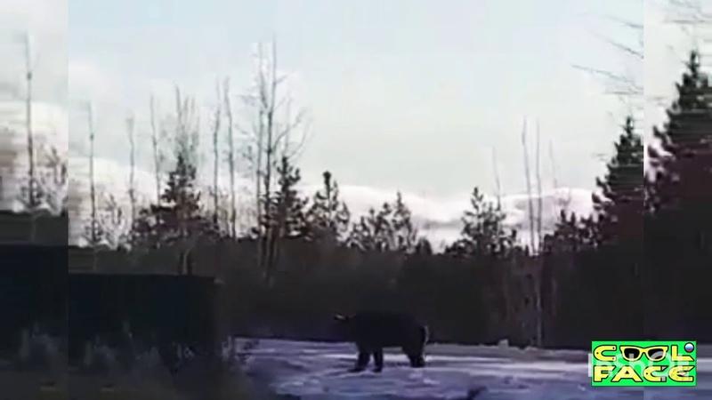 Медведь лезет в жилой дом на окрайне деревни Ноябрь 2020 Russian bear is attacking the house