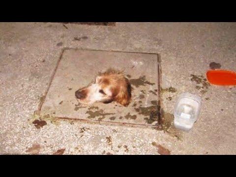 Собака попала в смертельную ловушку и надежды на спасение не было