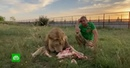 Суд оштрафовал владельца парка «Тайган» за укушенную львом клиентку
