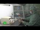 «Голубая кровь» может ли разработанный в СССР препарат помочь в борьбе с COVID-19