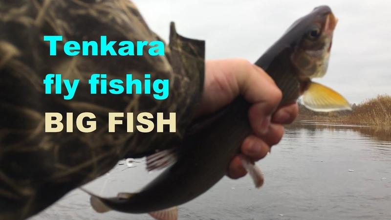 Tenkara fly fishing big fish