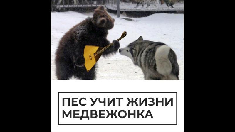 Дружба пса и медвежонка
