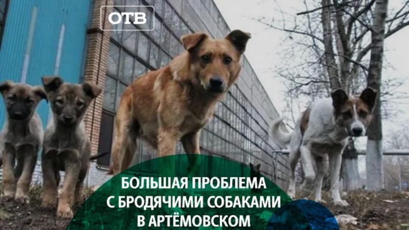 Бешенные псы атакуют