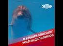 В Крыму спасают жизни дельфинов