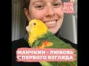 Каннателла и ее особенный попугай Манчкин