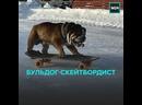 Пёс из Владивостока катается на скейте — Москва 24