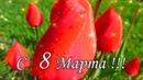 🌼🌸ОБАЛДЕННАЯ КРАСИВАЯ ОТКРЫТКА НА 8 МАРТА!🌺Супер поздравление!🌷🌻С Международным женским днем🌹