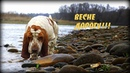 Весне дорогу! Видео про собак. Dog video. Жизнь собак. Live Dog.