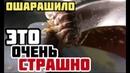 УЖАС! Украинских офицеров накормили тараканами. Слуги народа заработали миллионы