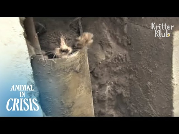 Kitten Reaches Out His Hand For People, Hoping Theyd Save Him | Animal in Crisis EP119